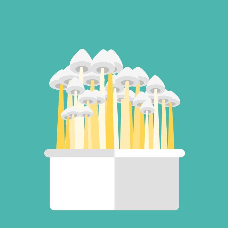 psylocibin FDA depression mushrooms