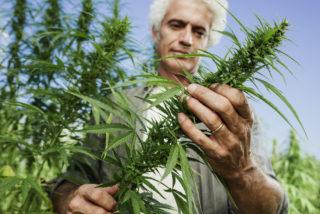 marijuana farm employment Oregon